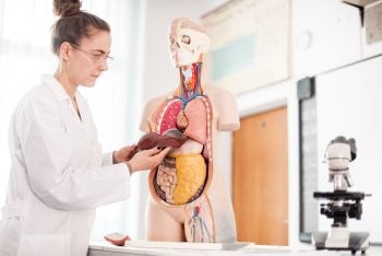 Female Doctor holding liver model